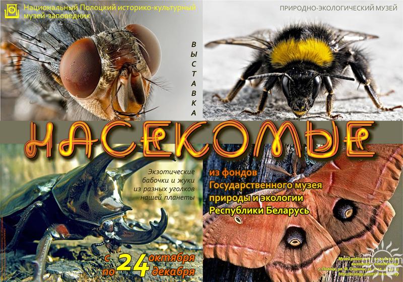 ыставка насекомых в Природно-экологическом музее в Полоцке